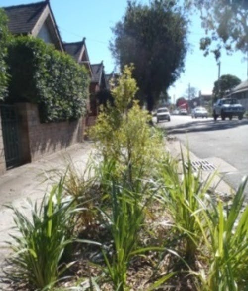 Example of verge garden