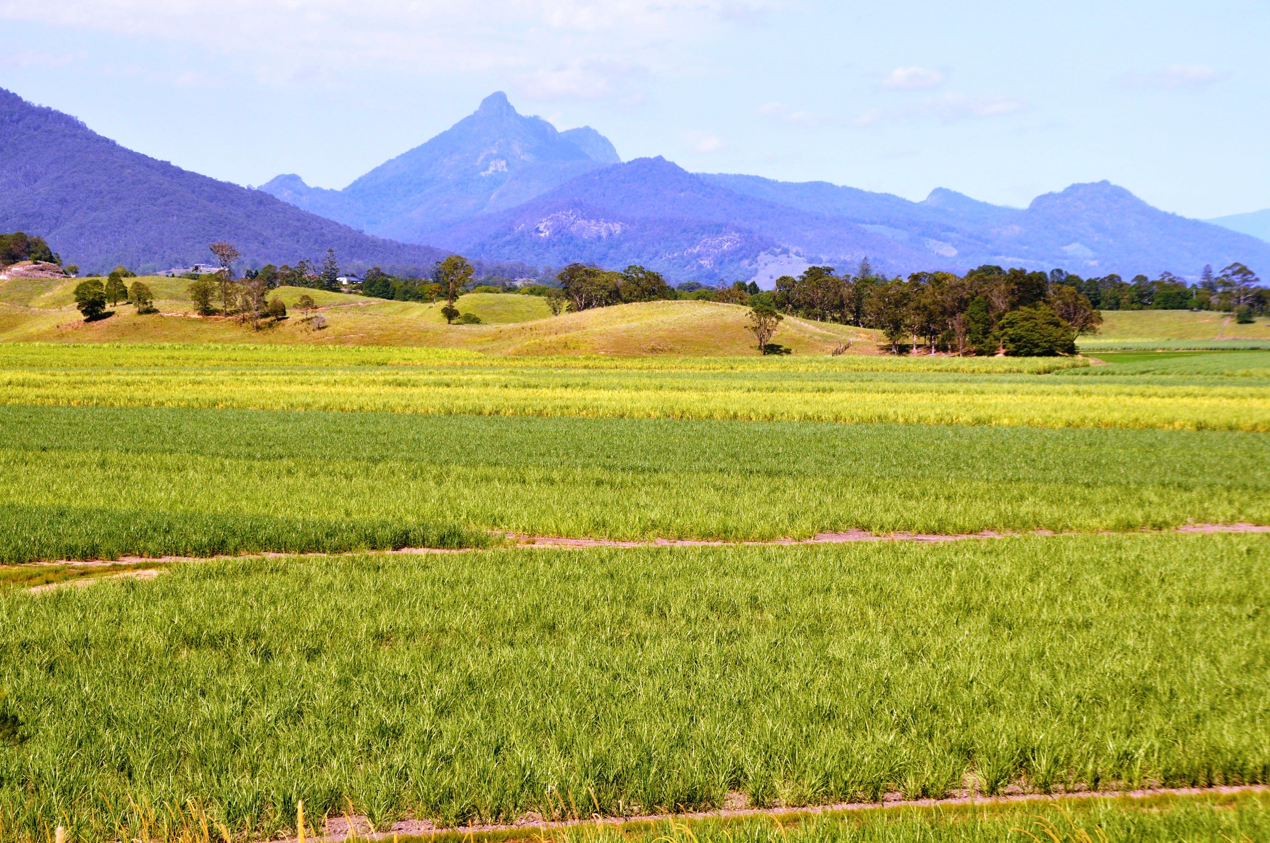 Sugar Cane flats with landscape