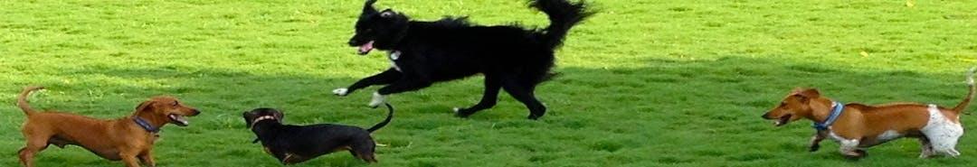 Banner dog park2