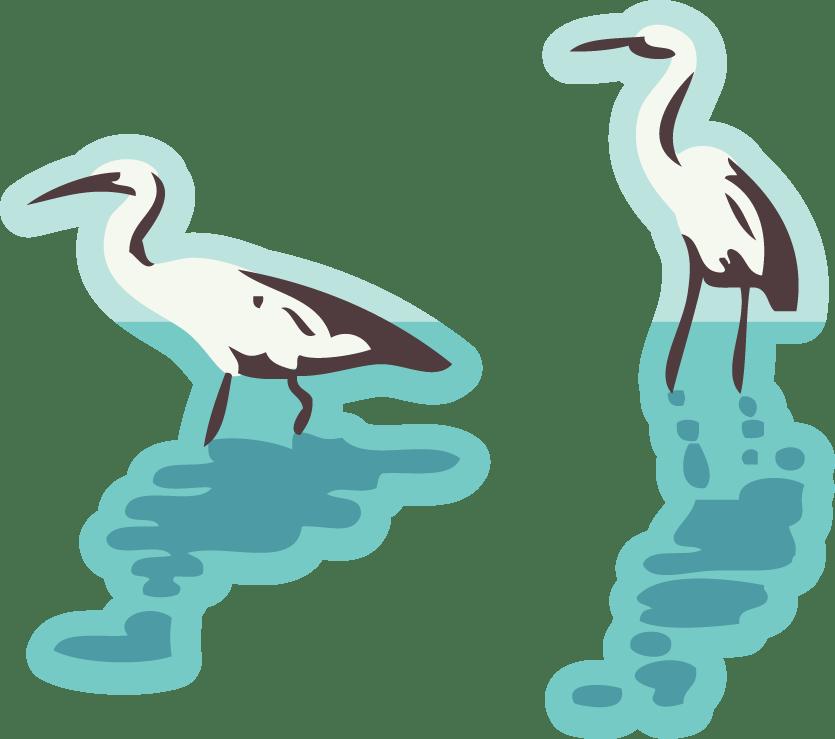 Wbopdc coastal erosion birds