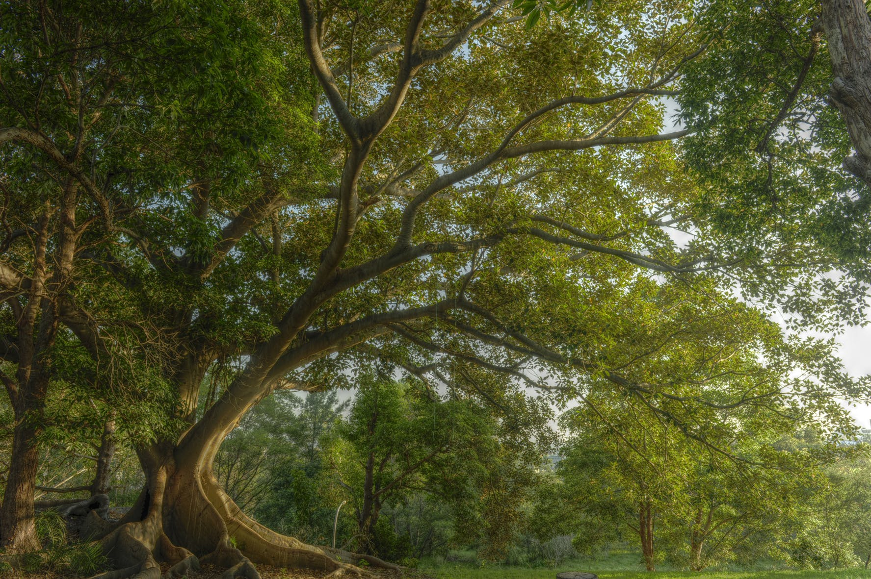 Callan Park Sandstone Jungle by Tom Ulman