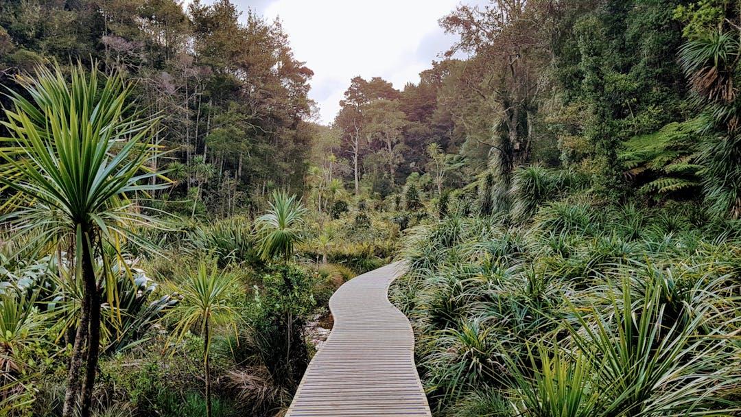 Walkway through native wetland in Birkenhead