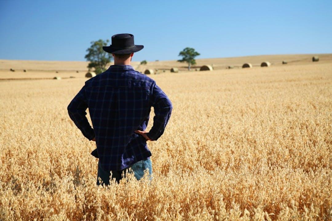 Man in Rural Field