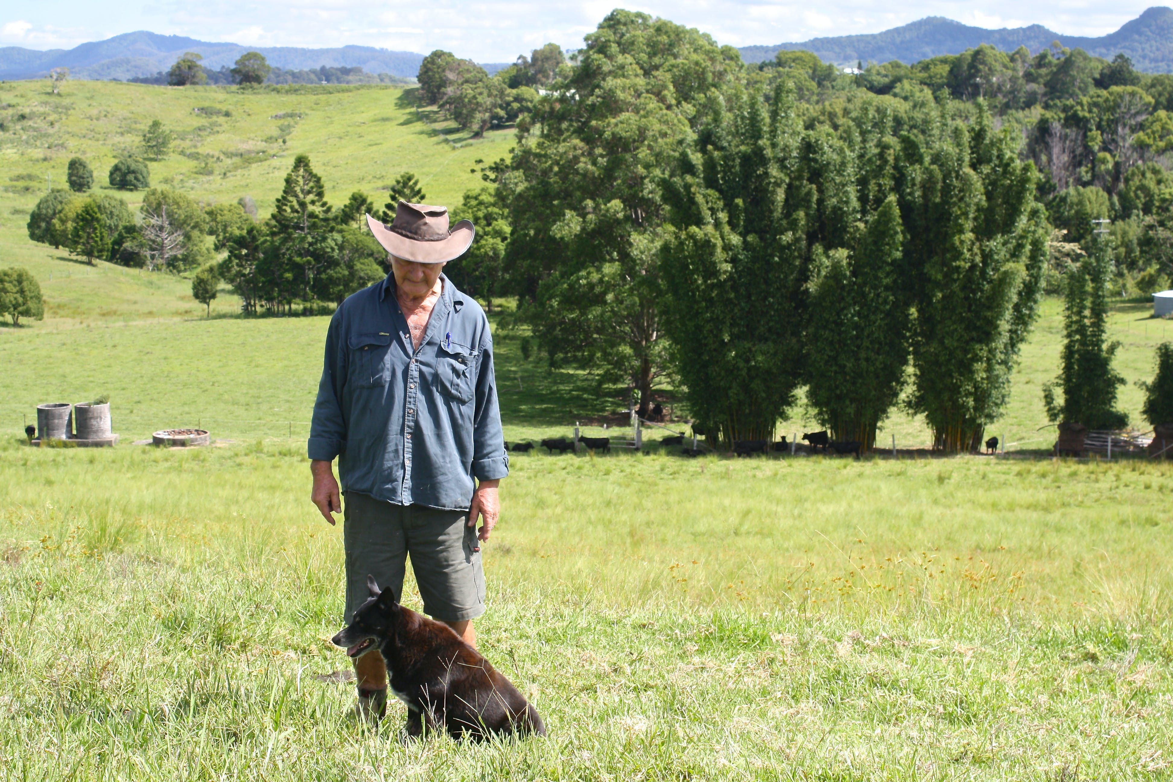 Merv Pepper, long time Myocum farmer. Read his story in the draft Strategy