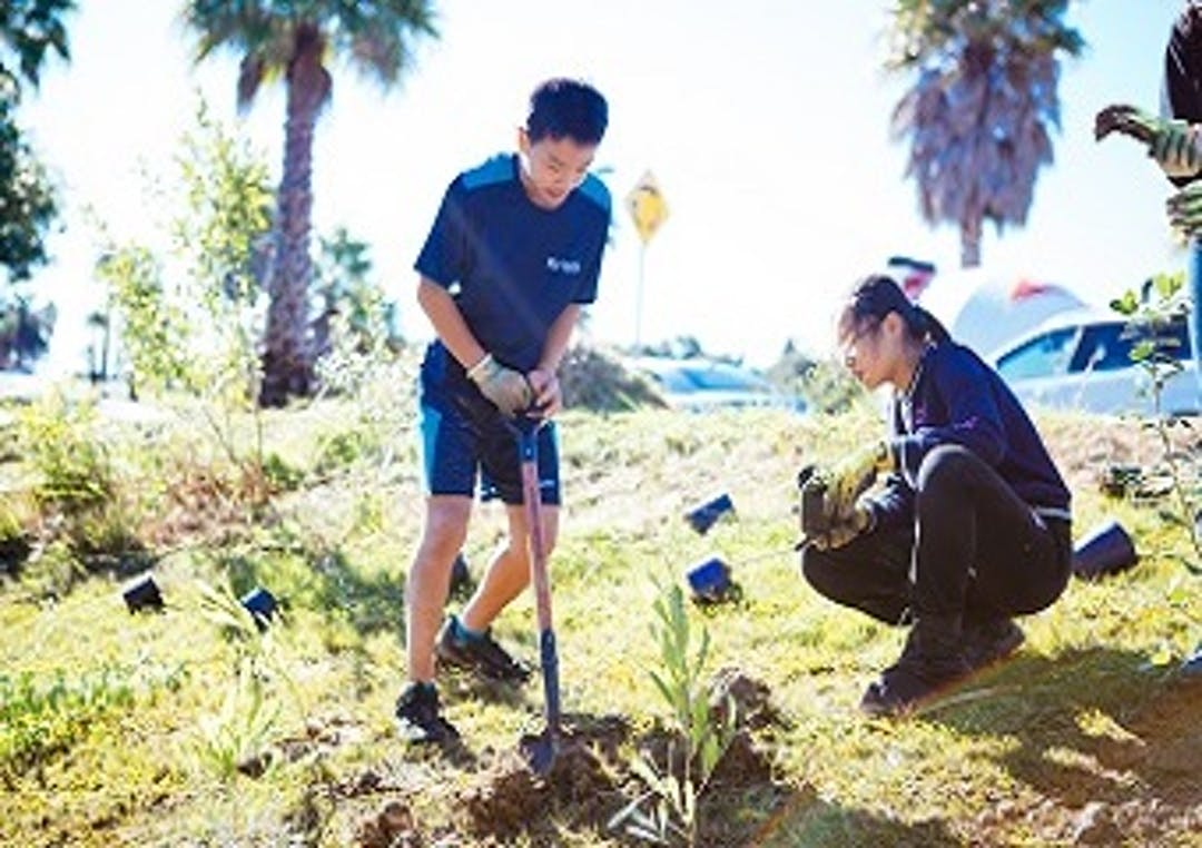 Unsworth Reserve Community Planting