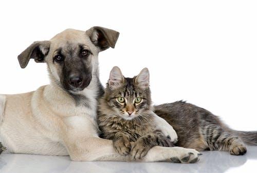 Animal Management Plan