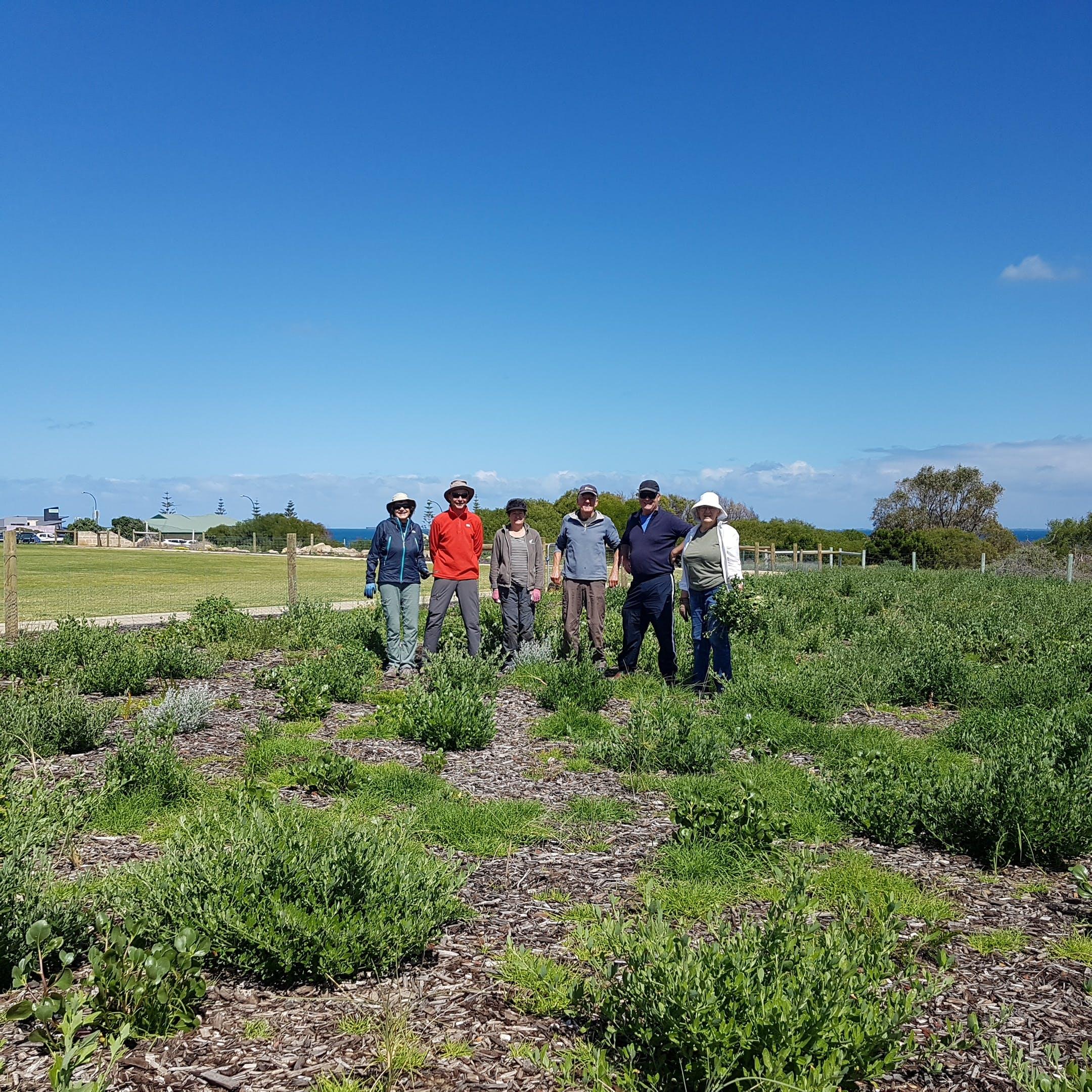 Friends of Allen Park Weeding - Swanbourne Greenway