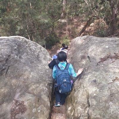 Guided School Holiday Bushwalk   Harold Reid Reserve   6 Oct 2016  (1)