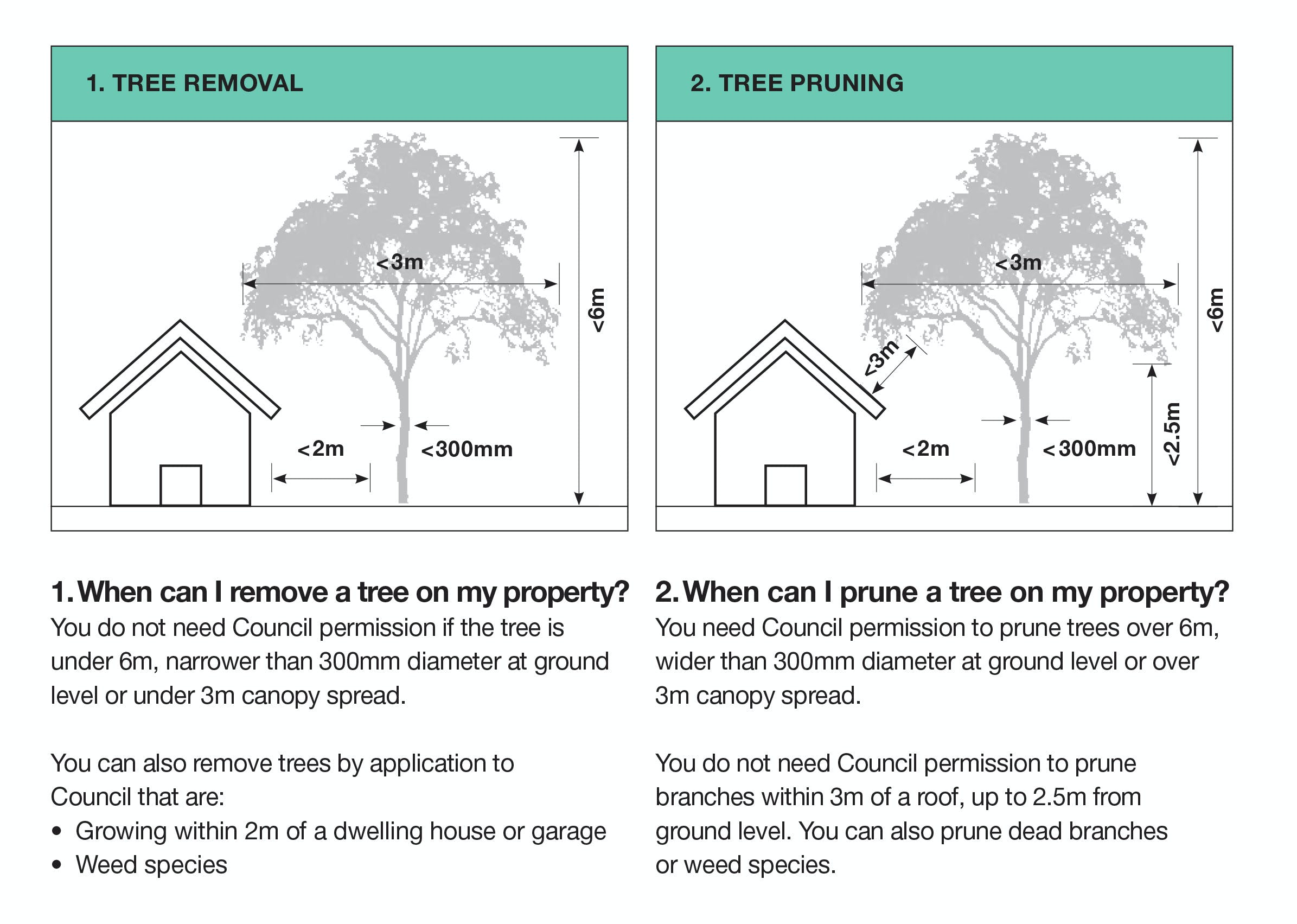 When can I remove or prune a tree on my property?