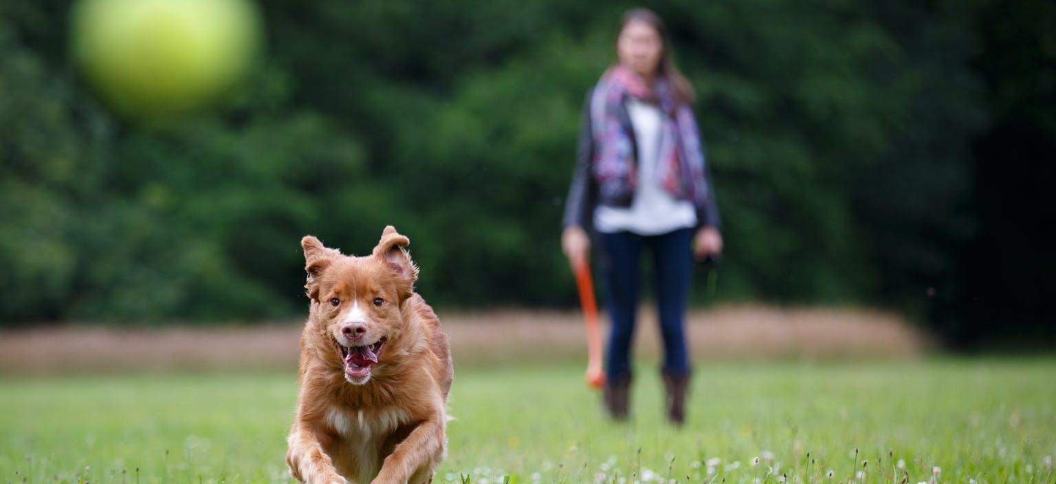 Dog off leash enhancement page webtile