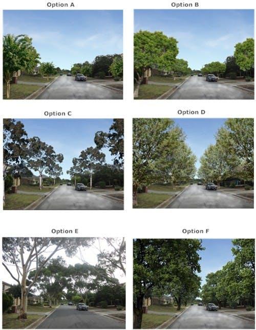 Streetscape Preference Options