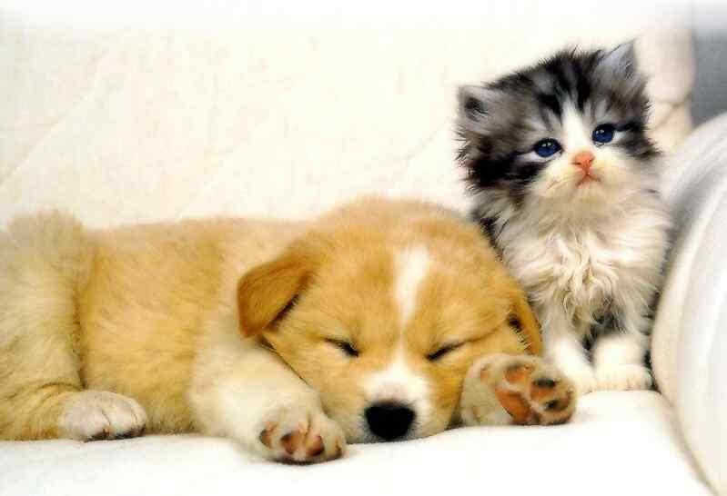 Dog Cat1
