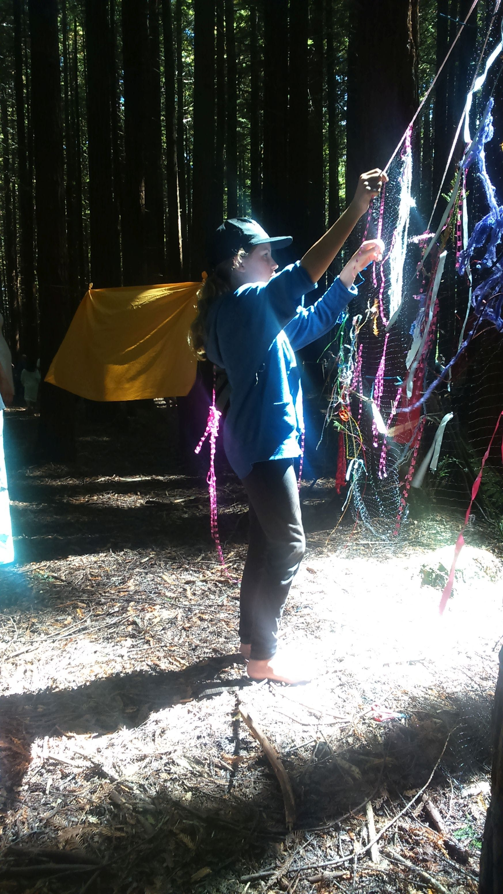 #13 Dream Weaving in the Redwoods