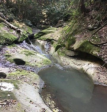 Upper Mooloolah Nature Refuge