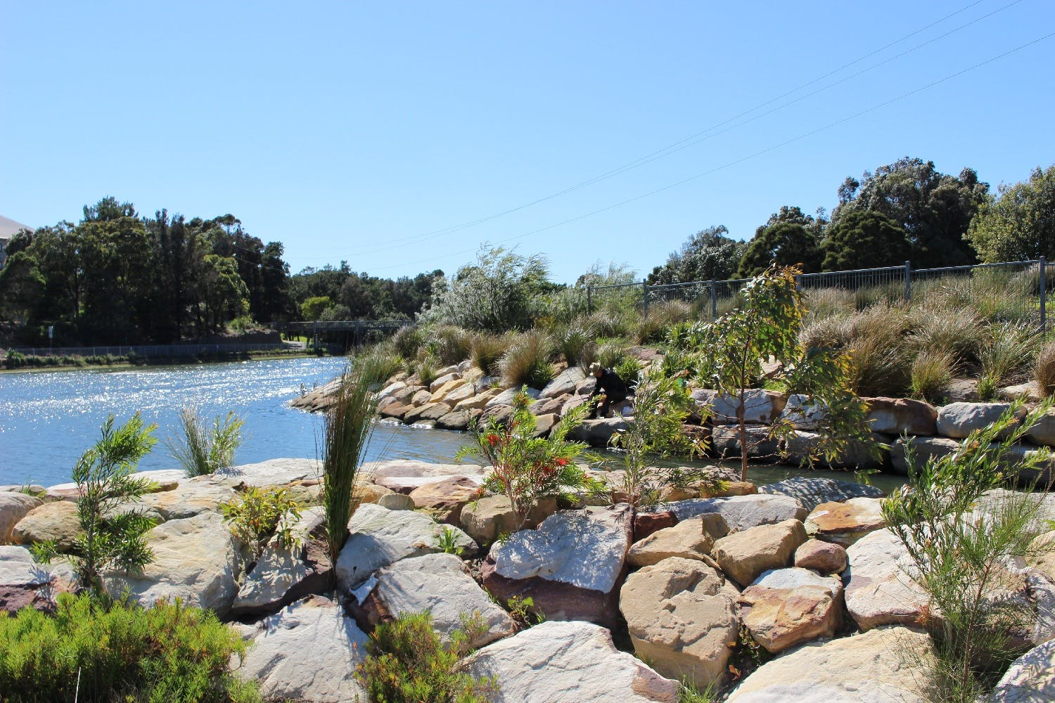 The new bank will be made up of sandstone boulders and low growing native plants (Photo Cooks River)