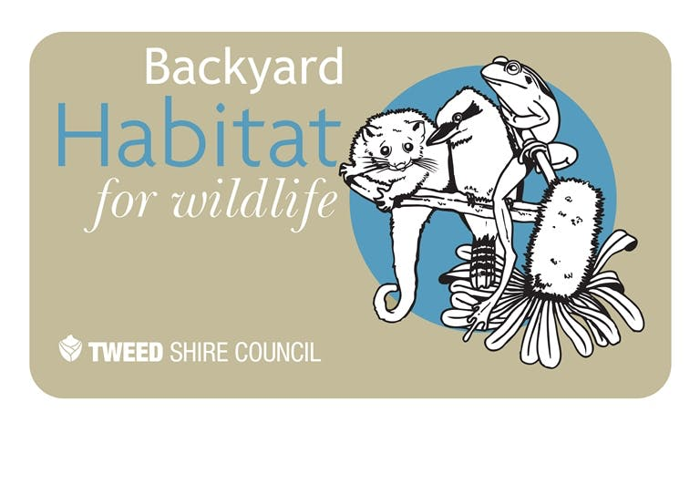 backyard habitat for wildlife your say tweed