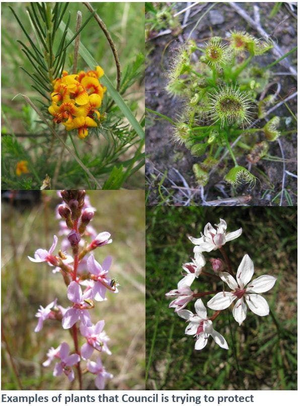 Examples of plants that are not weeds