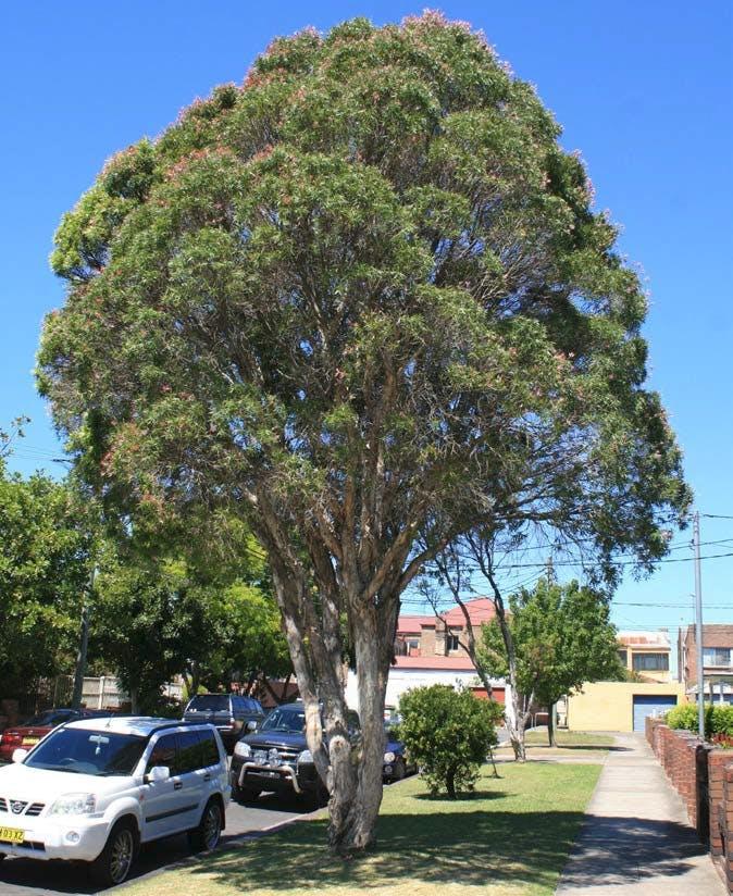 Station Street Tree Planting