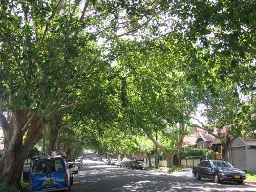 Street Tree Master Plan