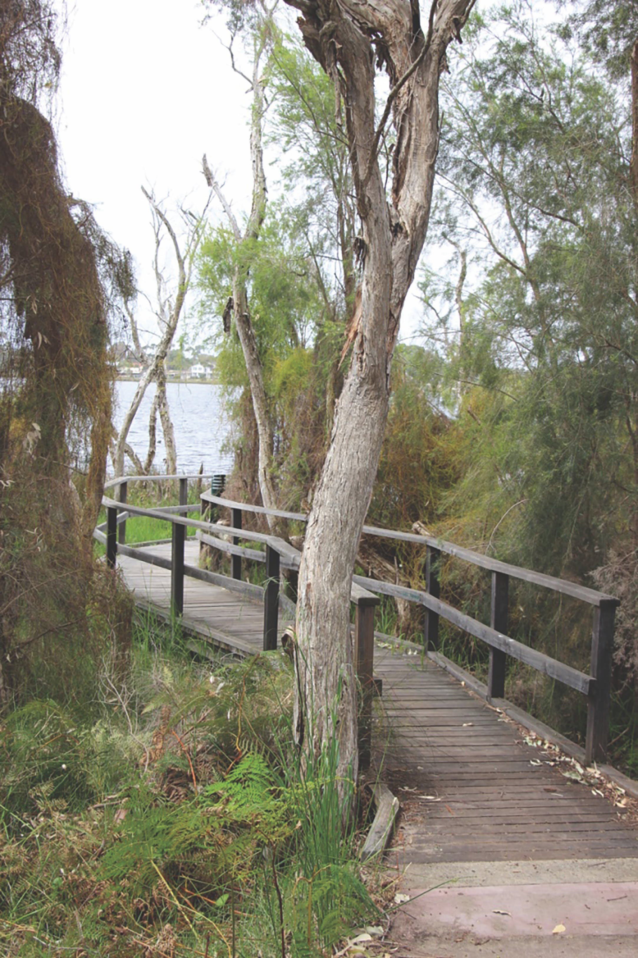 Clontarf boardwalk