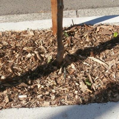 Tree Pit Mulch