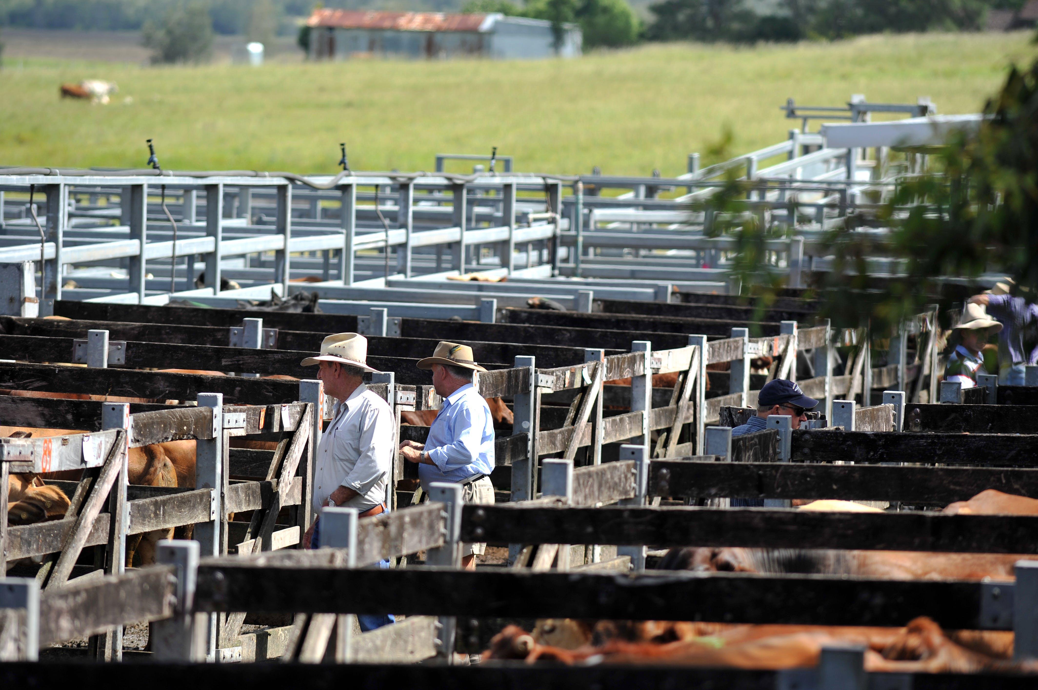 Kempsey Regional Saleyards 2