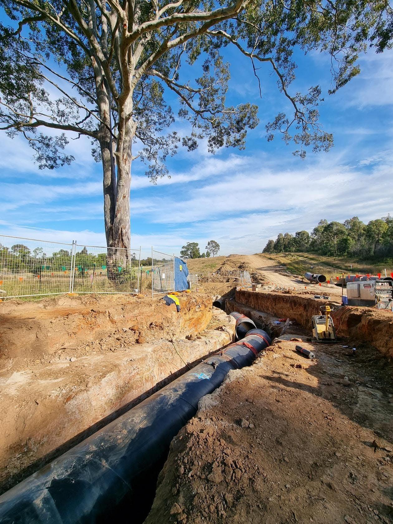 Western Sydney Parklands protected tree - June 2021