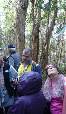 Kooloonbung Creek Walk