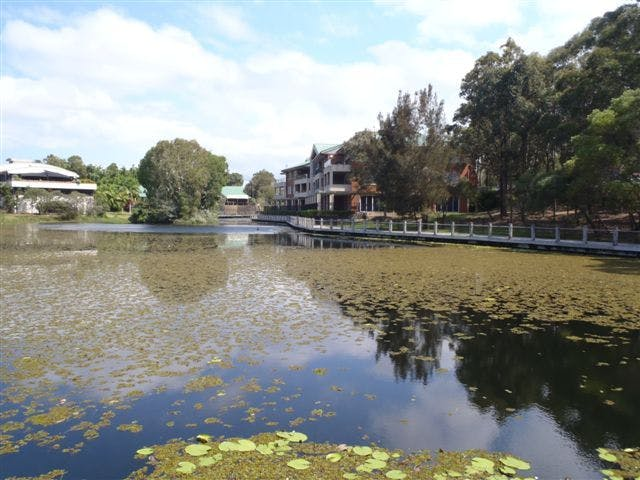 Lake Orpheus after Salvinia was mechanically removed