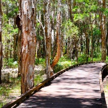 boardwalk amongst trees