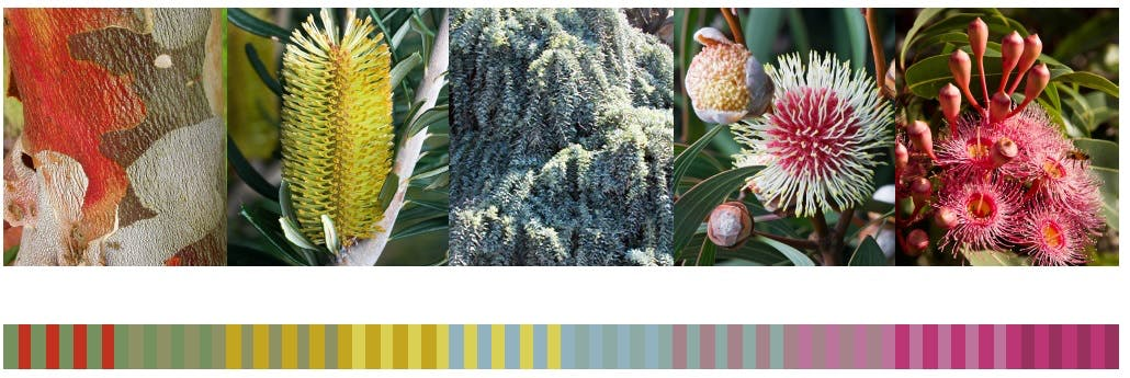 OPTION 3: Native flora inspired colours