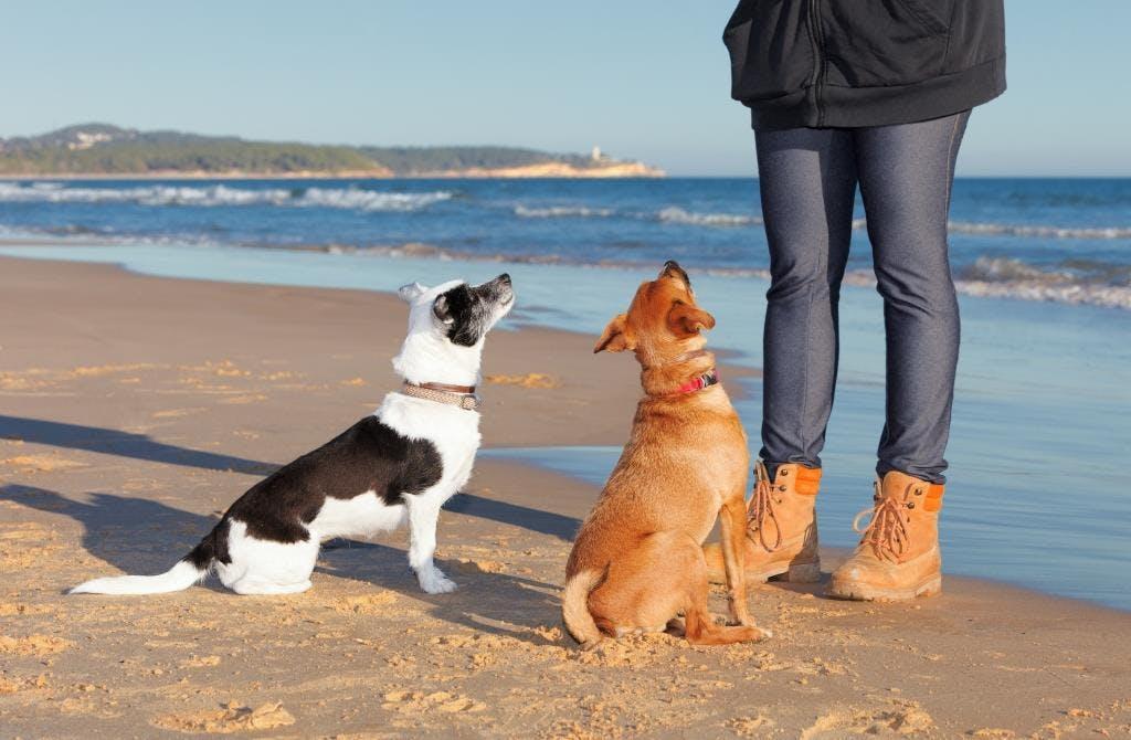 Dog Shutterstock 384108589
