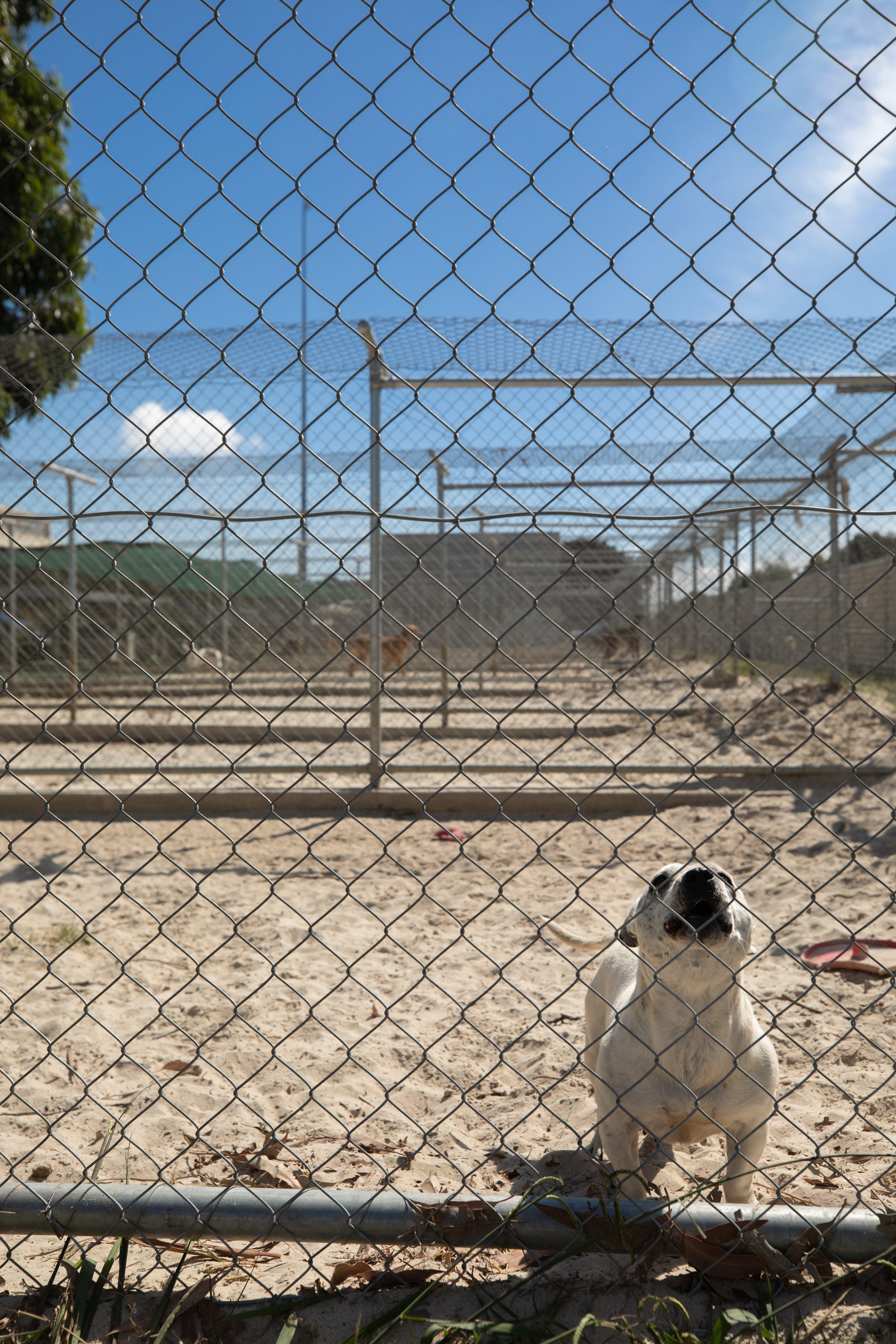 Animal Shelter-3648.jpg