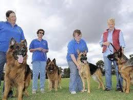 Dog Training at Melbourne sportsground