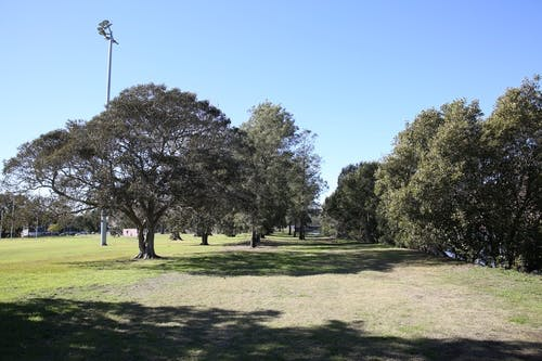 HJ Mahoney Reserve grassy field tree in the background