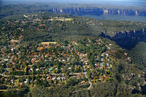Blue Mountains towns have a truly diverse range of trees