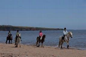Horse on beach image