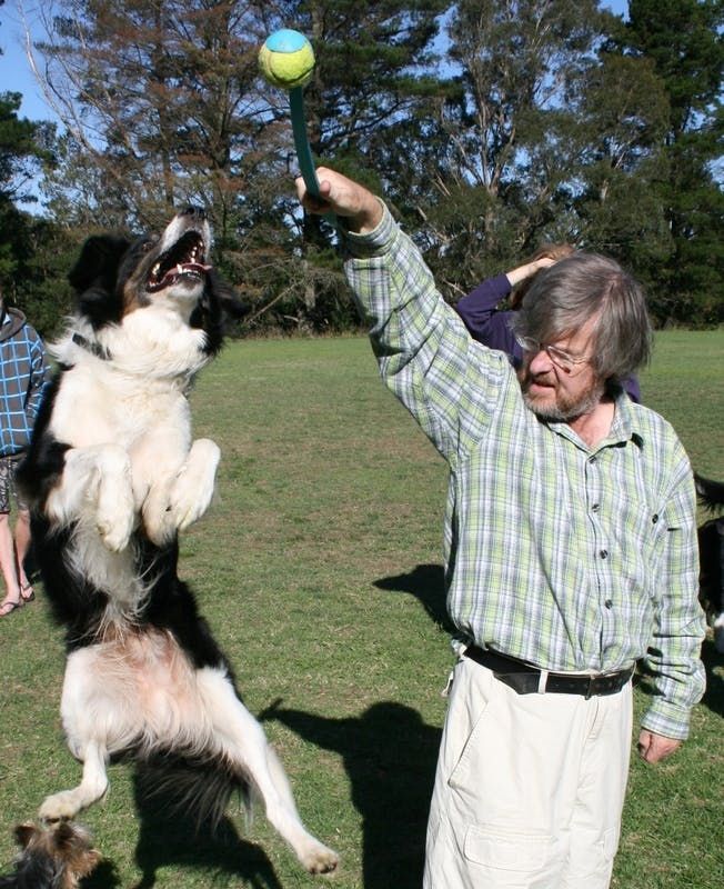 Dog off-leash recreation at Leura Oval