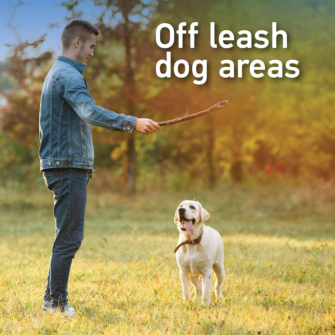 Off lead dog areas