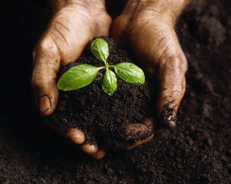 Soil Photo 1024x819