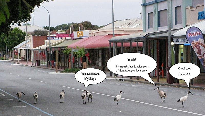 Alexandrina Council Staff Photo - Chatty Ibis