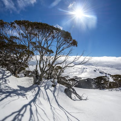 Winter sunrise Perisher Snowy Mountains. Photo: John Spencer,OEH