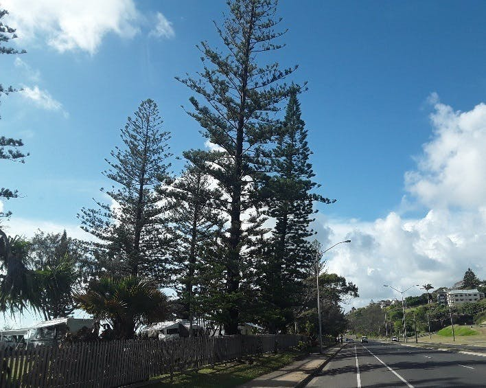 Notable Trees 1