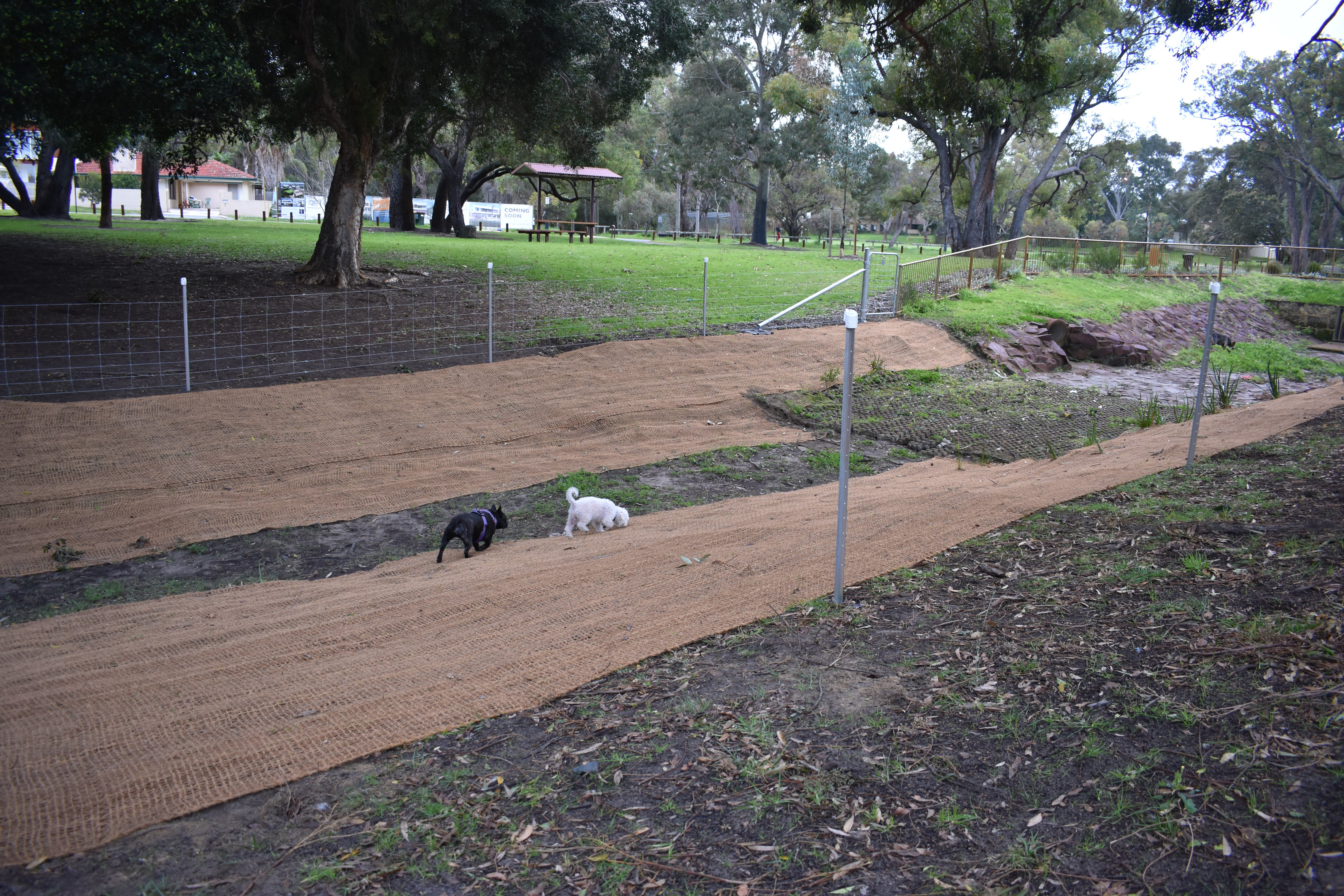 Stage 1 - dogs investigate - August 2020