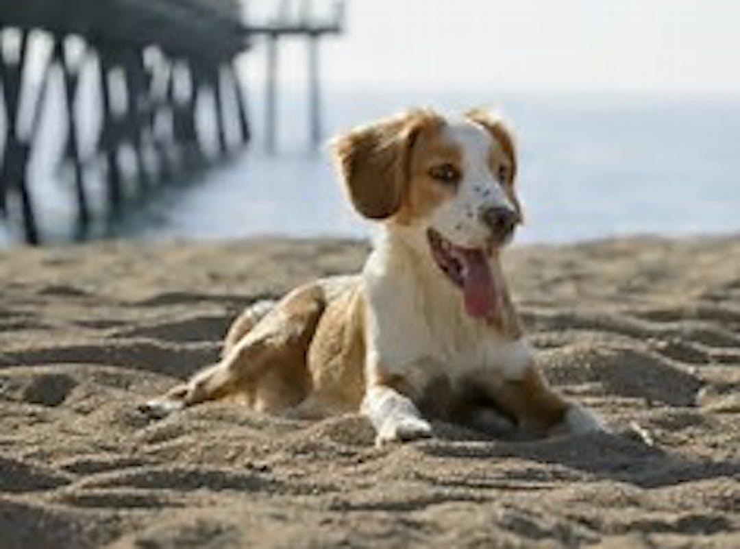 Dog on beach image