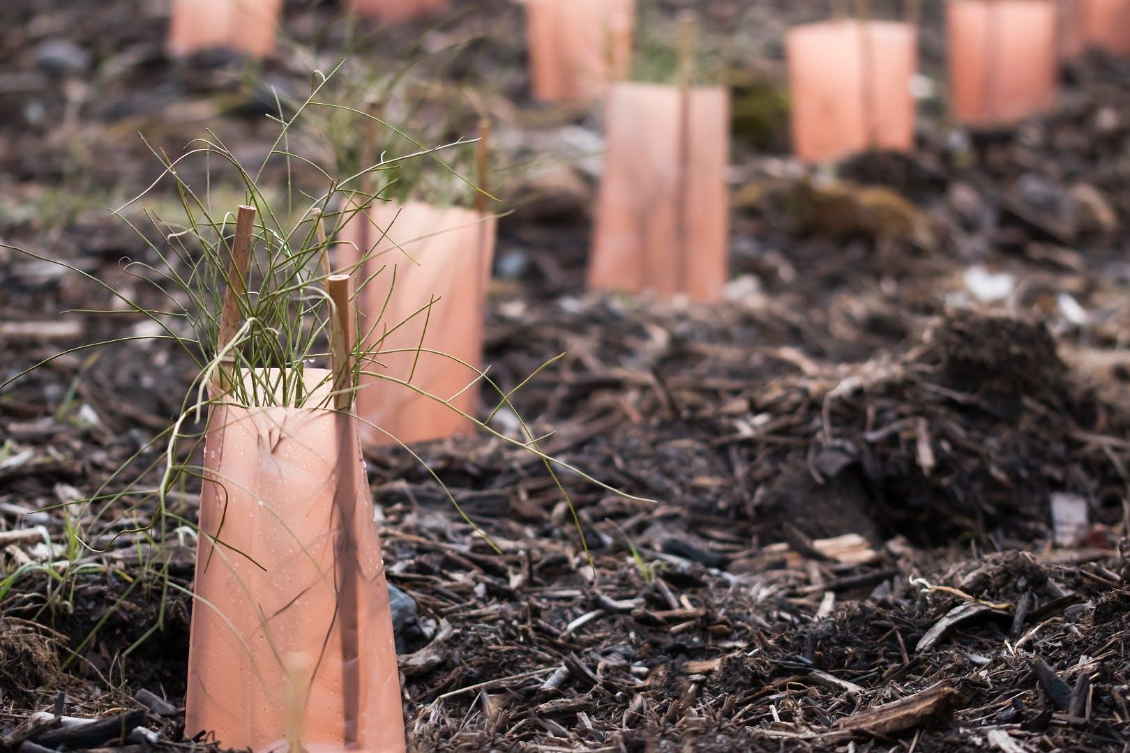 Biosolids on soil