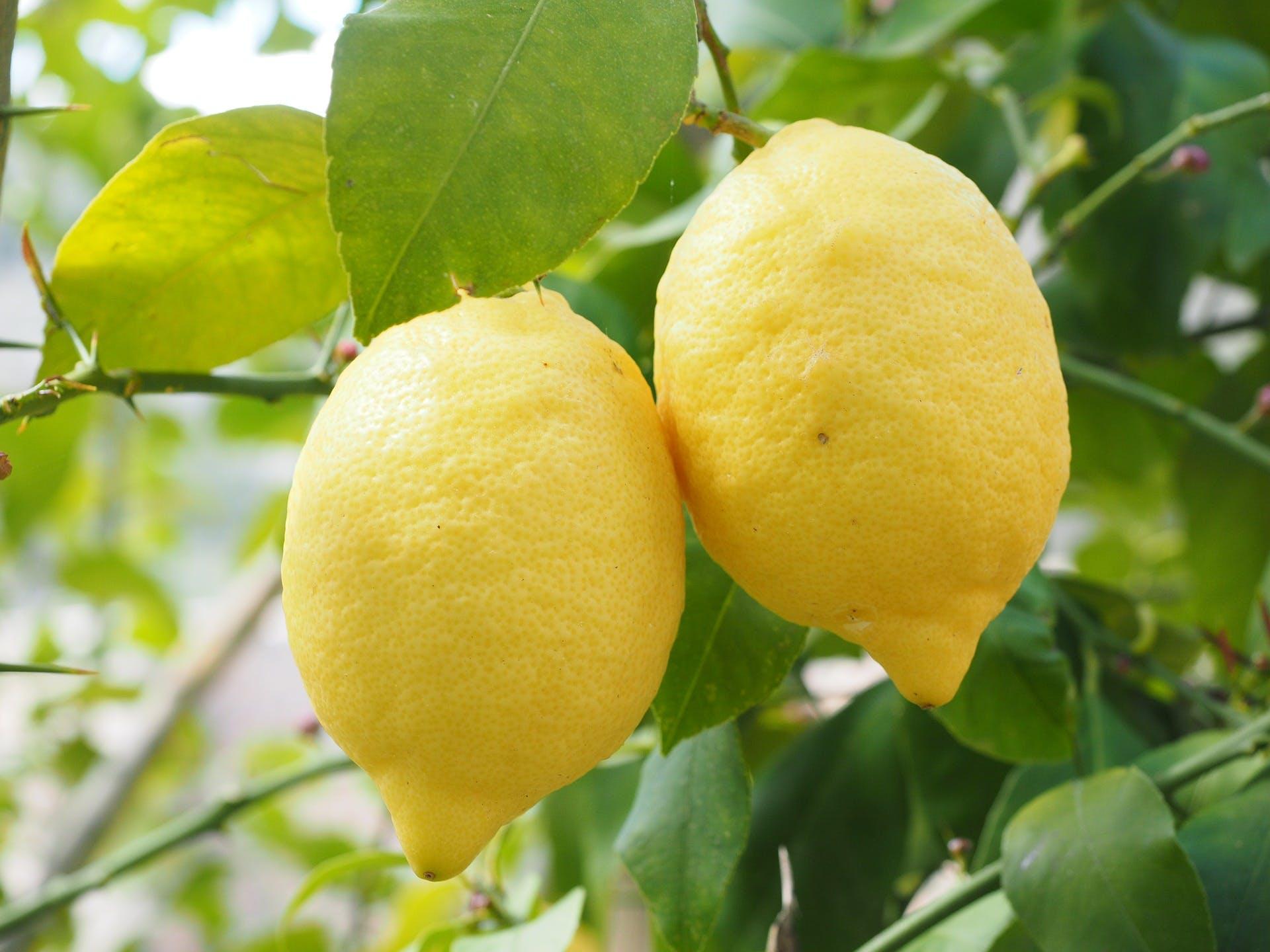 Lemon 1117568 1920
