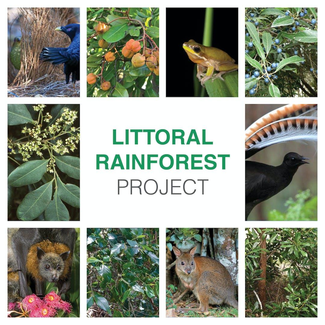 Littoralrainforest socialtiles 1080x1080px 2019