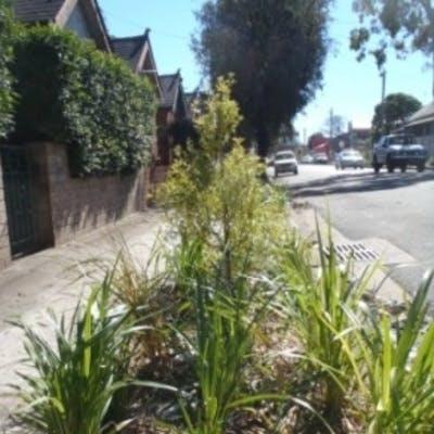 Verge garden example