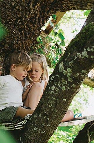 Tree strategy photo